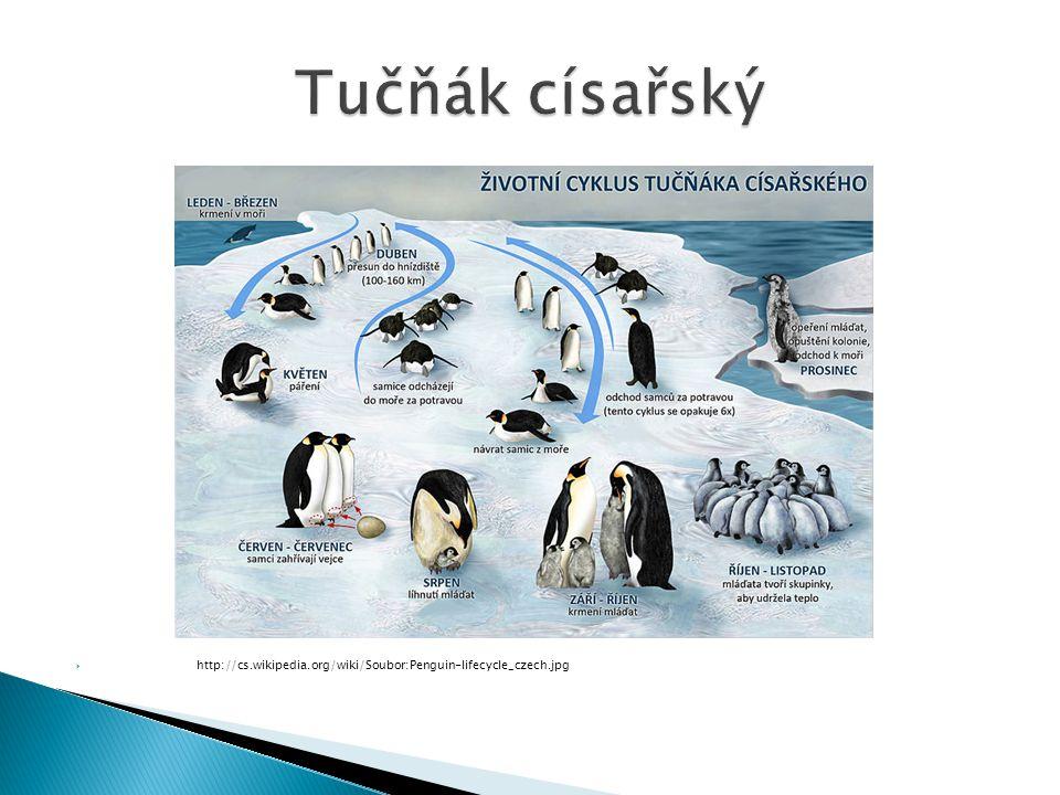  http://cs.wikipedia.org/wiki/Soubor:Penguin-lifecycle_czech.jpg