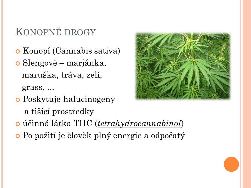 K ONOPNÉ DROGY Konopí (Cannabis sativa) Slengově – marjánka, maruška, tráva, zelí, grass,...