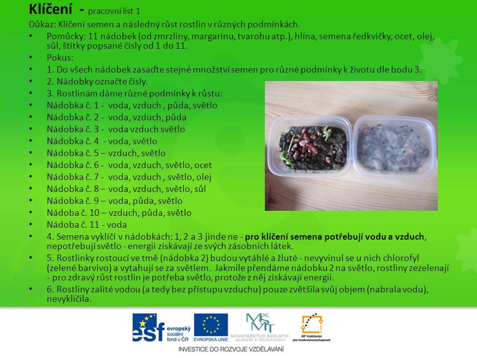 Klíčení - pracovní list 1 Důkaz: Klíčení semen a následný růst rostlin v různých podmínkách. • Pomůcky: 11 nádobek (od zmrzliny, margarinu, tvarohu at