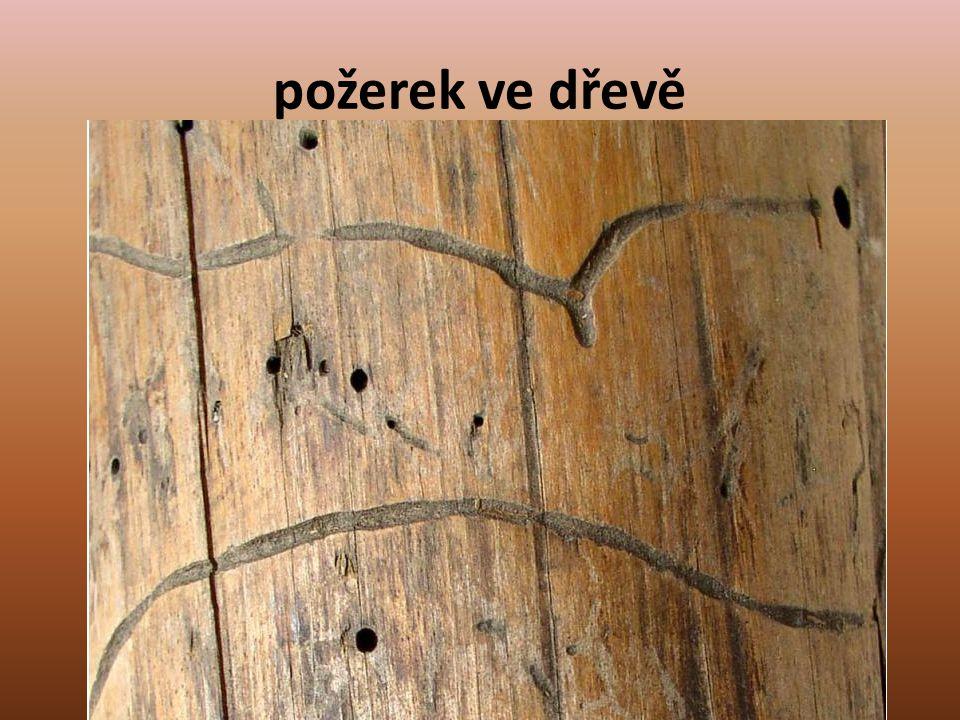 požerek ve dřevě