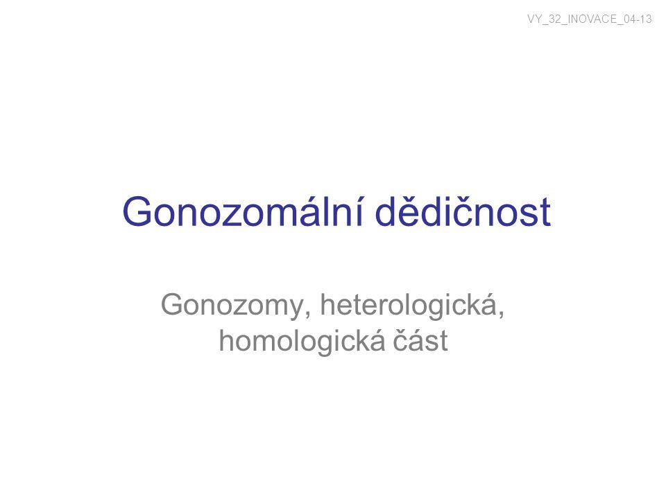 Gonozomální dědičnost Gonozomy, heterologická, homologická část VY_32_INOVACE_04-13