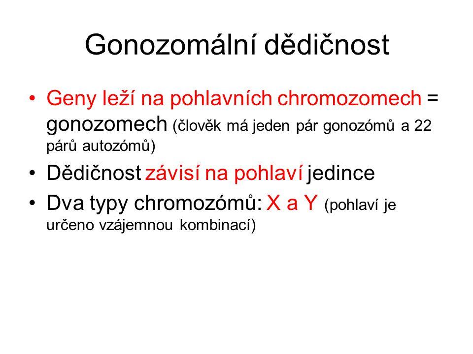 Gonozomální dědičnost •Geny leží na pohlavních chromozomech = gonozomech (člověk má jeden pár gonozómů a 22 párů autozómů) •Dědičnost závisí na pohlaví jedince •Dva typy chromozómů: X a Y (pohlaví je určeno vzájemnou kombinací)