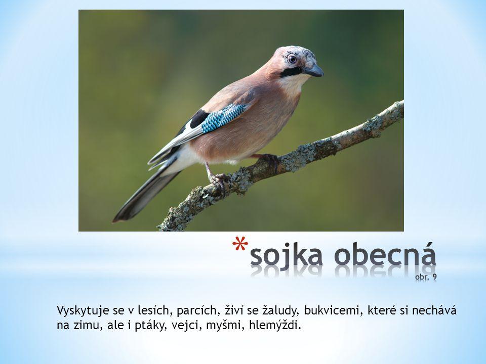 Vyskytuje se v lesích, parcích, živí se žaludy, bukvicemi, které si nechává na zimu, ale i ptáky, vejci, myšmi, hlemýždi.
