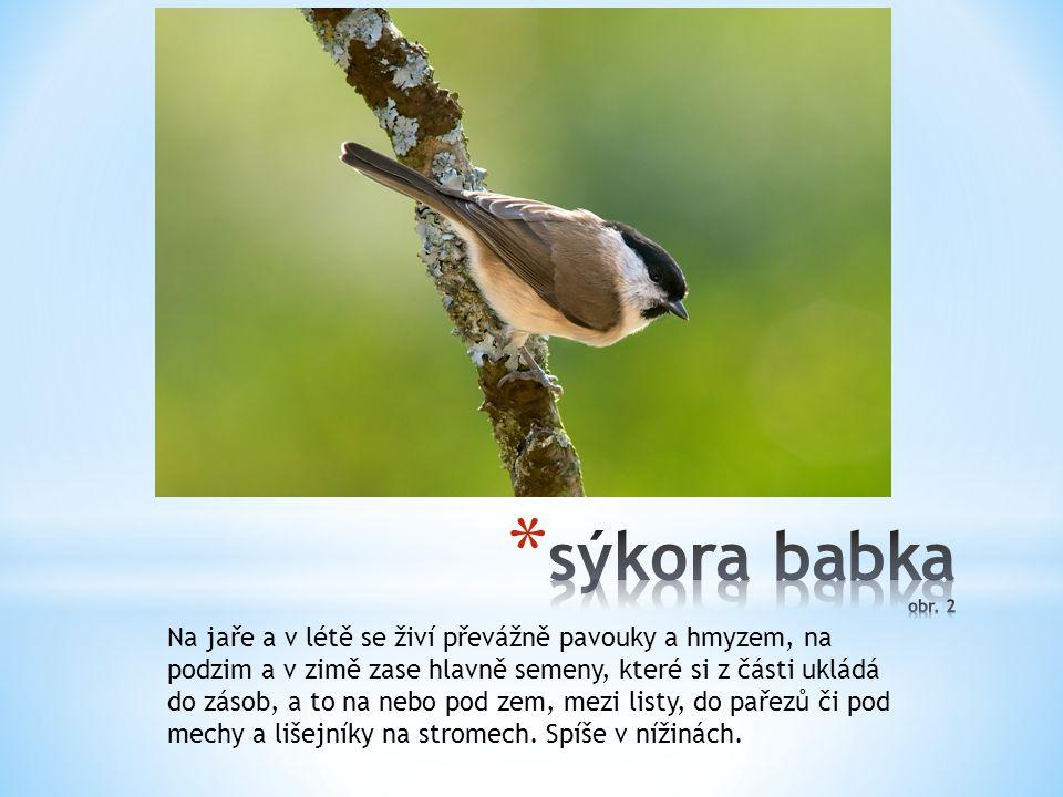 Mohutným zobákem vyklovává jádra z plodů, vyskytuje se v listnatých lesích, parcích, zahradách.