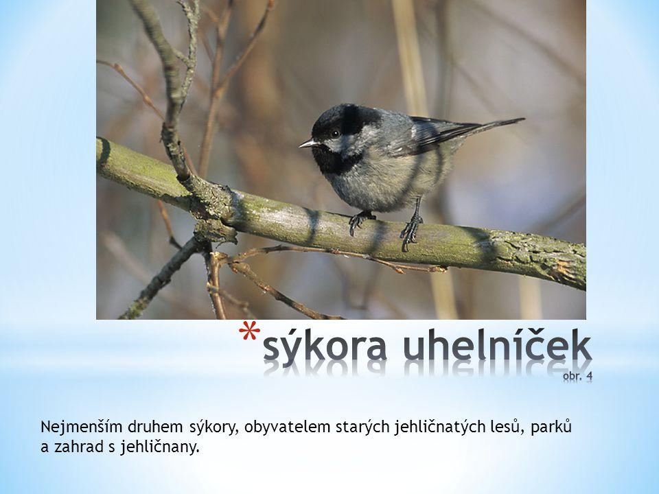 Hnízdí v hustých keřích nebo stromech, hnízdo maskované mechem a lišejníkem, živí se semeny, mláďata hmyzem.