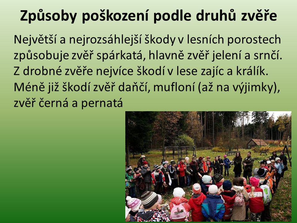 Ochrana lesa a přírodního prostředí Otázky k opakování 1.Jaké druhy poškození zvěří znáte.