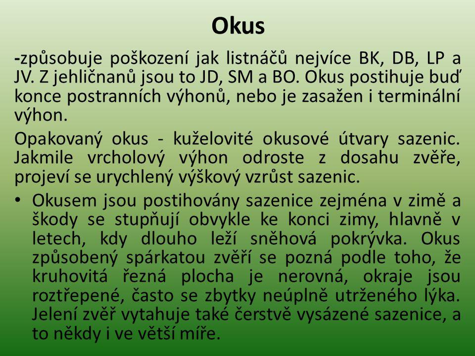 Okus -způsobuje poškození jak listnáčů nejvíce BK, DB, LP a JV.