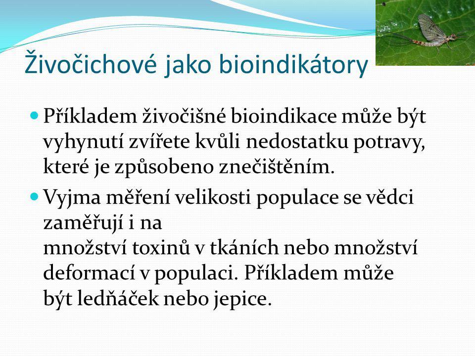 Živočichové jako bioindikátory  Příkladem živočišné bioindikace může být vyhynutí zvířete kvůli nedostatku potravy, které je způsobeno znečištěním.