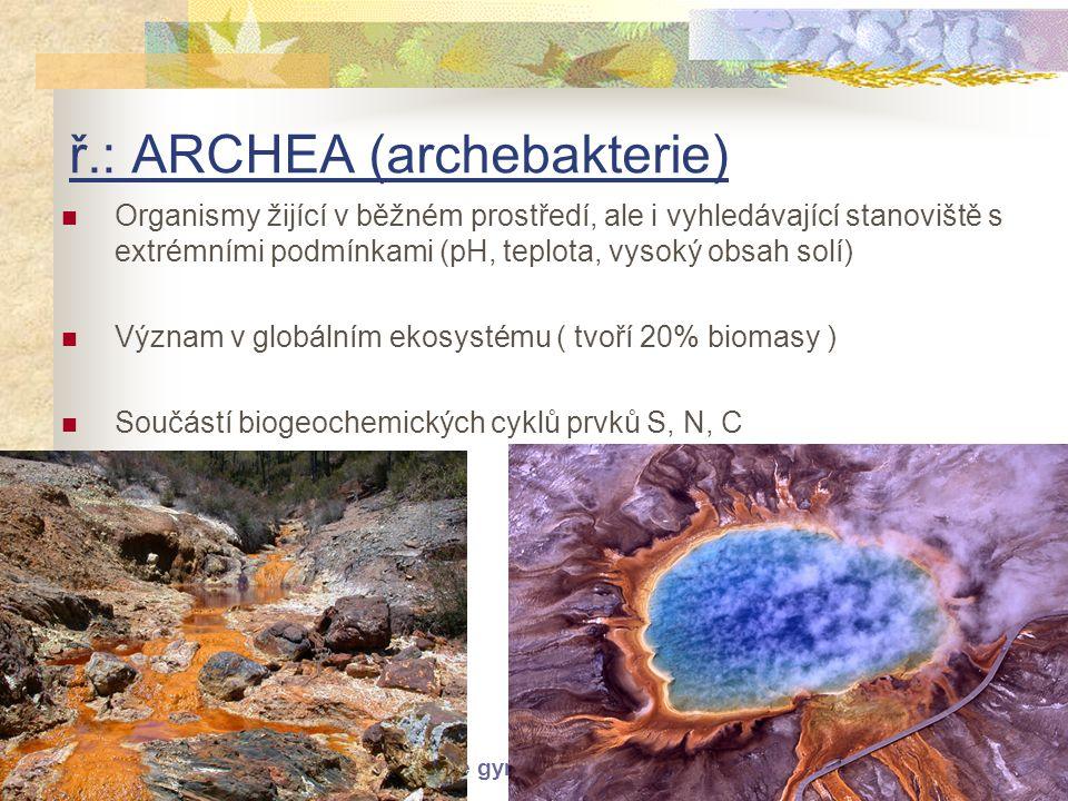 © Letohradské soukromé gymnázium o.p.s. ř.: ARCHEA (archebakterie)  Organismy žijící v běžném prostředí, ale i vyhledávající stanoviště s extrémními