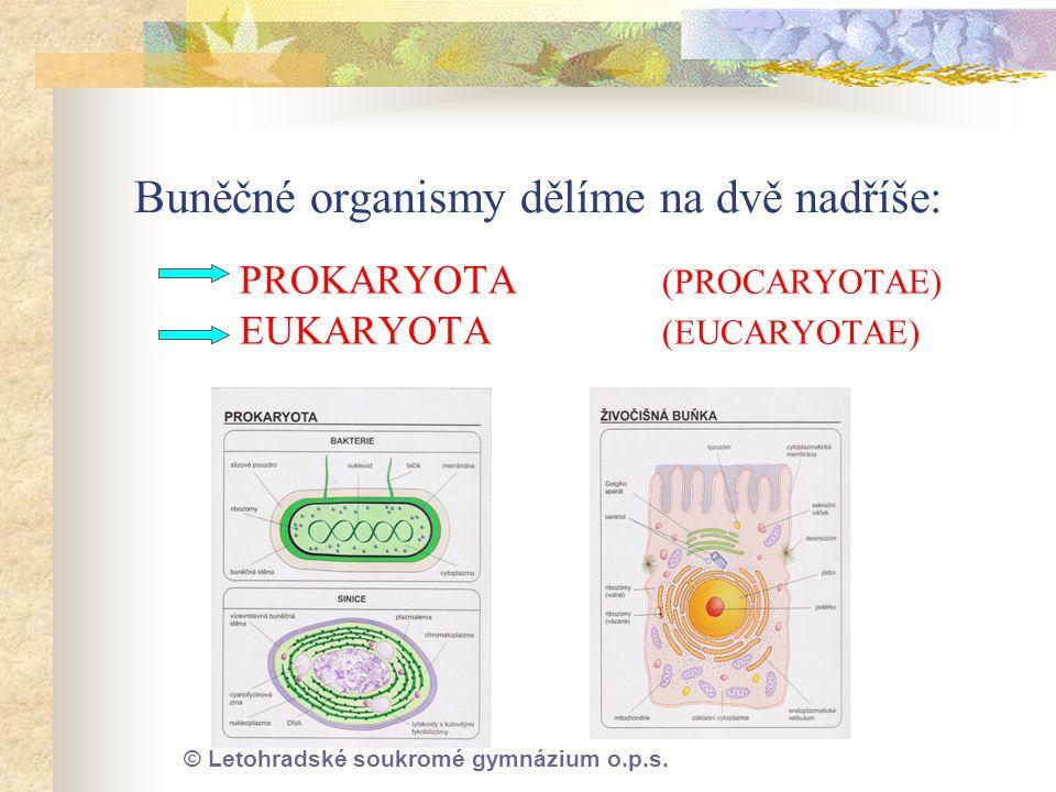 © Letohradské soukromé gymnázium o.p.s. Buněčné organismy dělíme na dvě nadříše: PROKARYOTA (PROCARYOTAE) EUKARYOTA (EUCARYOTAE)