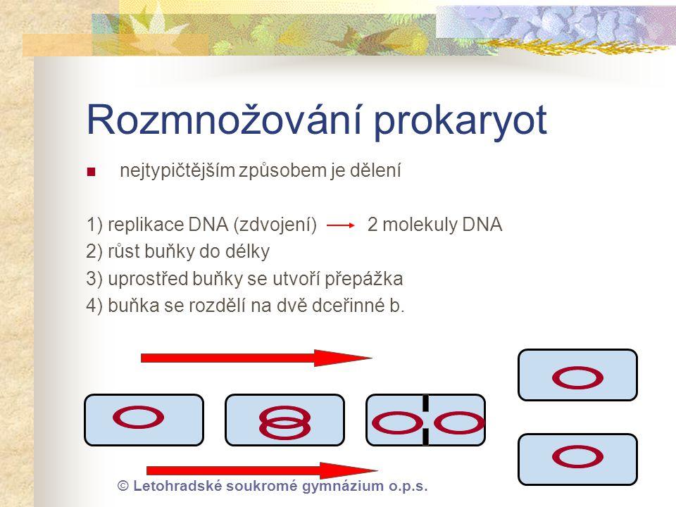 © Letohradské soukromé gymnázium o.p.s. Rozmnožování prokaryot  nejtypičtějším způsobem je dělení 1) replikace DNA (zdvojení) 2 molekuly DNA 2) růst