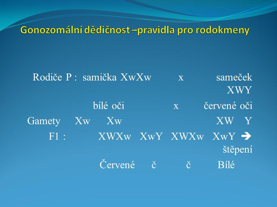X vázaná gonozomální dědičnost  mutovaný gen je lokalizován na chromozomu X A) X vázaný dominantní typ dědičnosti = GD typ Platí : xY = nemocný otec, Xx = nemocná matka !!.