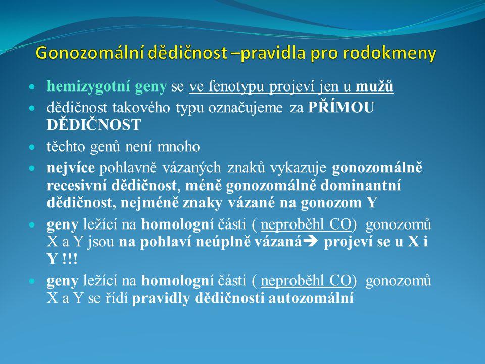  hemizygotní geny se ve fenotypu projeví jen u mužů  dědičnost takového typu označujeme za PŘÍMOU DĚDIČNOST  těchto genů není mnoho  nejvíce pohlavně vázaných znaků vykazuje gonozomálně recesivní dědičnost,  méně gonozomálně dominantní dědičnost,  nejméně znaky vázané na gonozom Y  geny ležící na homologní části ( neproběhl CO) gonozomů X a Y jsou na pohlaví neúplně vázaná  projeví se u X i Y !!.