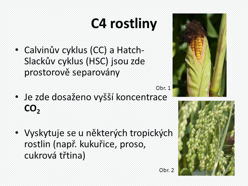 C4 rostliny • Calvinův cyklus (CC) a Hatch- Slackův cyklus (HSC) jsou zde prostorově separovány • Je zde dosaženo vyšší koncentrace CO 2 • Vyskytuje se u některých tropických rostlin (např.