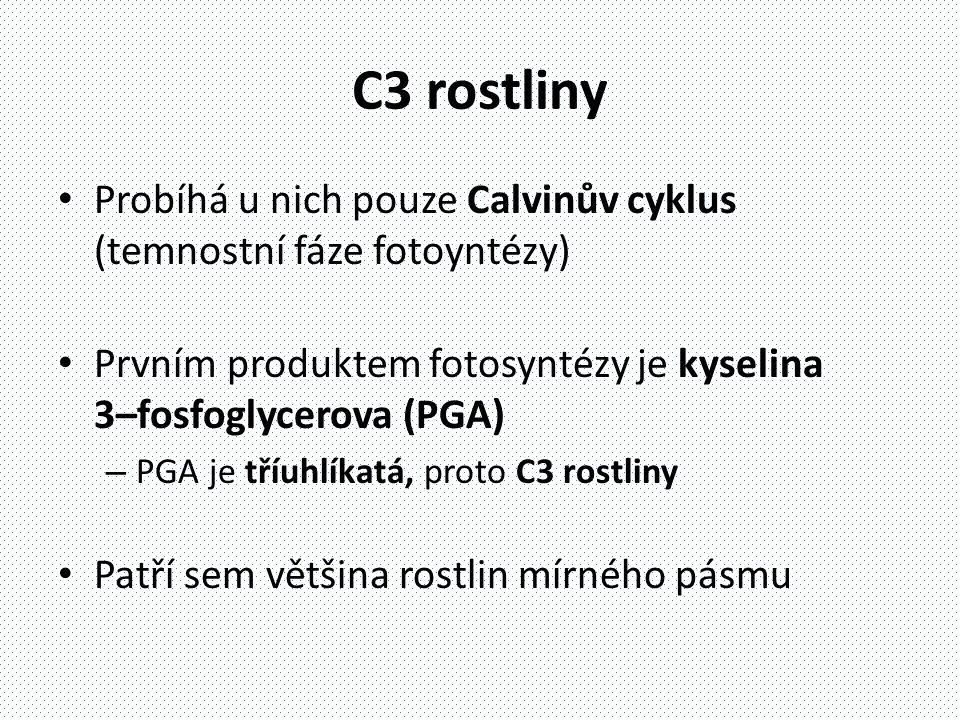 C3 rostliny • Probíhá u nich pouze Calvinův cyklus (temnostní fáze fotoyntézy) • Prvním produktem fotosyntézy je kyselina 3–fosfoglycerova (PGA) – PGA je tříuhlíkatá, proto C3 rostliny • Patří sem většina rostlin mírného pásmu