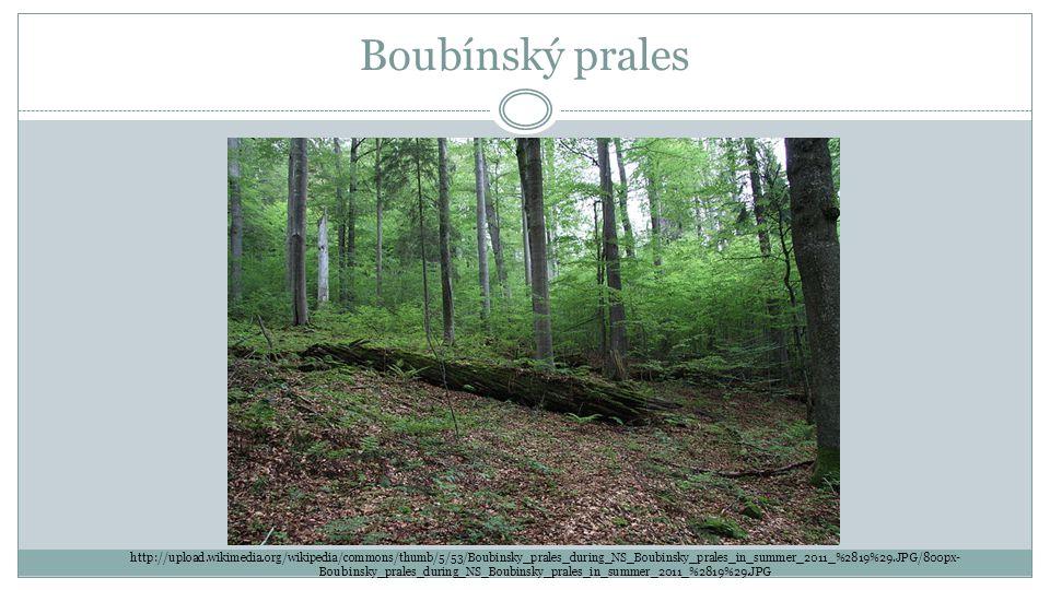 Boubínský prales http://upload.wikimedia.org/wikipedia/commons/thumb/5/53/Boubinsky_prales_during_NS_Boubinsky_prales_in_summer_2011_%2819%29.JPG/800p