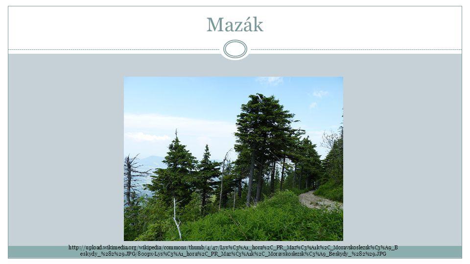 Mazák http://upload.wikimedia.org/wikipedia/commons/thumb/4/47/Lys%C3%A1_hora%2C_PR_Maz%C3%A1k%2C_Moravskoslezsk%C3%A9_B eskydy_%282%29.JPG/800px-Lys%