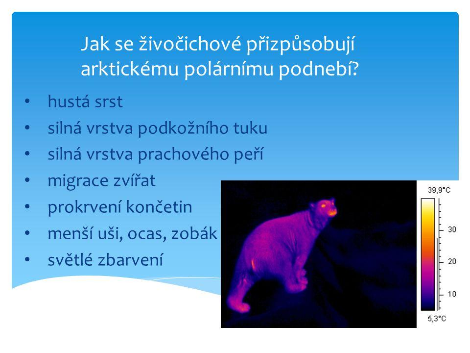 Poznáš polární živočichy?