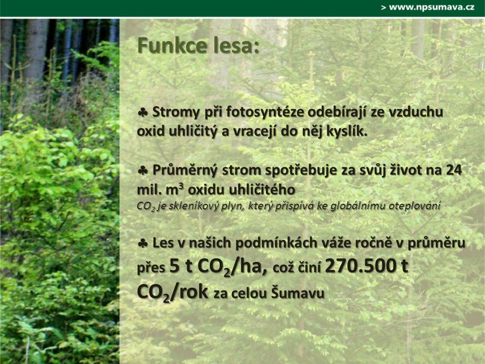  Stromy při fotosyntéze odebírají ze vzduchu oxid uhličitý a vracejí do něj kyslík.