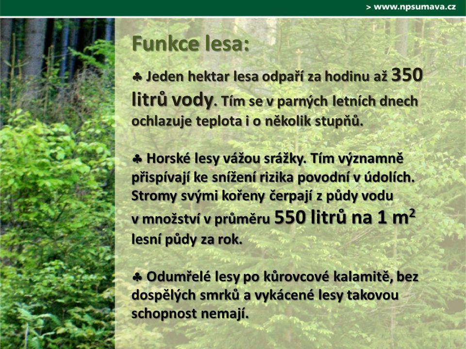  Jeden hektar lesa odpaří za hodinu až 350 litrů vody.
