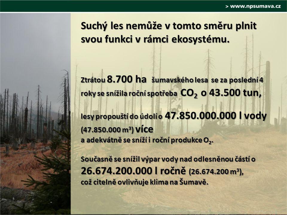 Suchý les nemůže v tomto směru plnit svou funkci v rámci ekosystému.