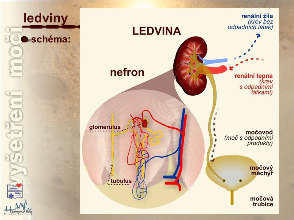 leukocyty převzato z : http://www.mnof.cz/sediment/ vyšetření močového sedimentu