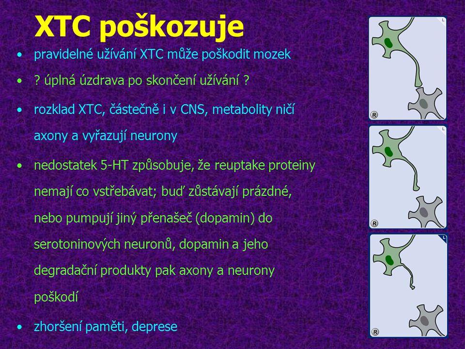 XTC poškozuje •pravidelné užívání XTC může poškodit mozek •? úplná úzdrava po skončení užívání ? •rozklad XTC, částečně i v CNS, metabolity ničí axony