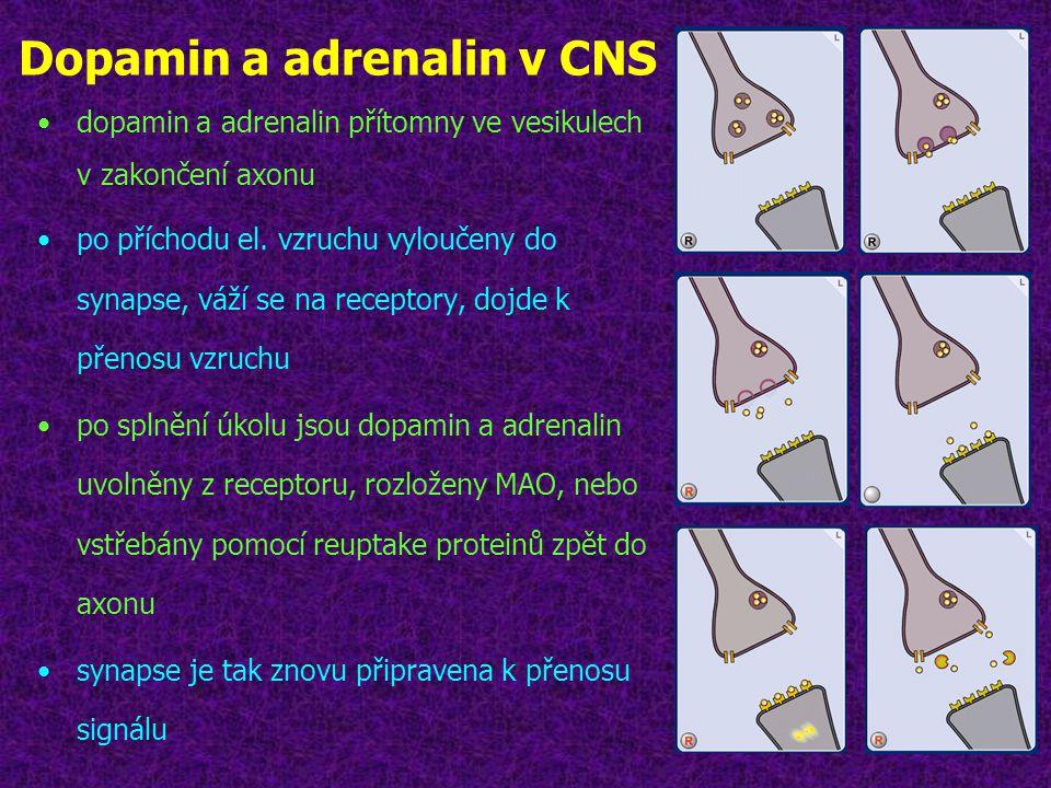Dopamin a adrenalin v CNS •dopamin a adrenalin přítomny ve vesikulech v zakončení axonu •po příchodu el. vzruchu vyloučeny do synapse, váží se na rece