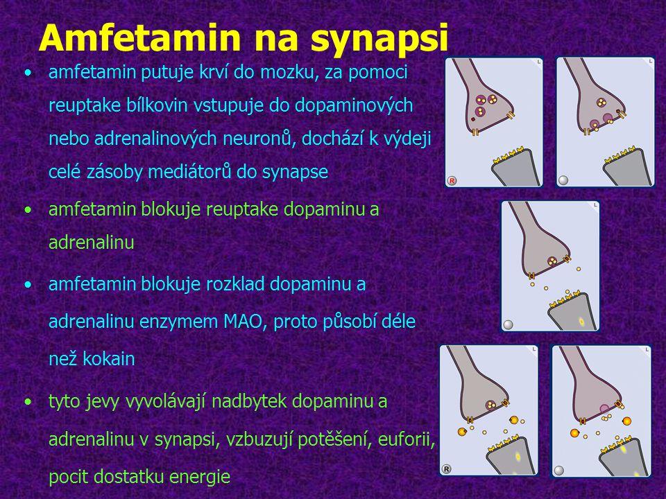 Amfetamin na synapsi •amfetamin putuje krví do mozku, za pomoci reuptake bílkovin vstupuje do dopaminových nebo adrenalinových neuronů, dochází k výde
