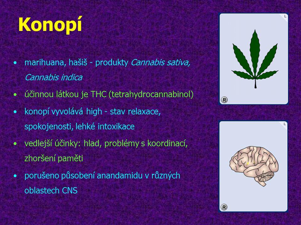 Konopí •marihuana, hašiš - produkty Cannabis sativa, Cannabis indica •účinnou látkou je THC (tetrahydrocannabinol) •konopí vyvolává high - stav relaxa