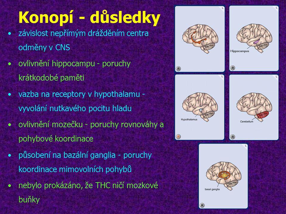 Konopí - důsledky •závislost nepřímým drážděním centra odměny v CNS •ovlivnění hippocampu - poruchy krátkodobé paměti •vazba na receptory v hypothalam