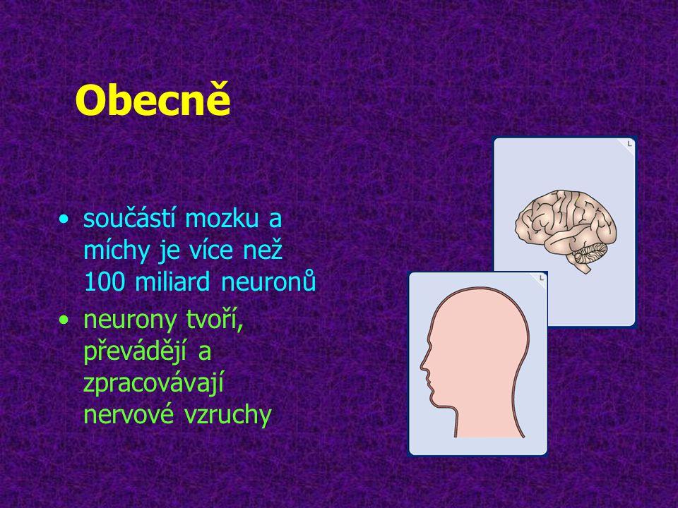 Obecně •součástí mozku a míchy je více než 100 miliard neuronů •neurony tvoří, převádějí a zpracovávají nervové vzruchy