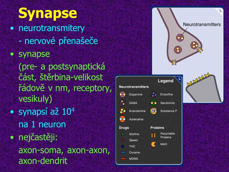 Dopamin a adrenalin v CNS •dopamin a adrenalin přítomny ve vesikulech v zakončení axonu •po příchodu el.