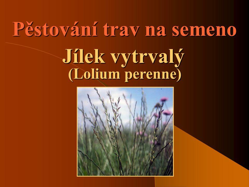 SOŠS a SOU KadaňVíceleté pícniny - Jílek vytrvalý2 Význam pěstování trav  Jde o pěstování trav za účelem získání osiva.