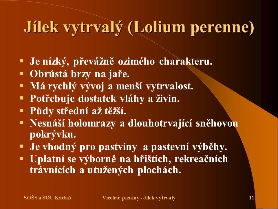 SOŠS a SOU KadaňVíceleté pícniny - Jílek vytrvalý11 Jílek vytrvalý (Lolium perenne)  Je nízký, převážně ozimého charakteru.  Obrůstá brzy na jaře. 