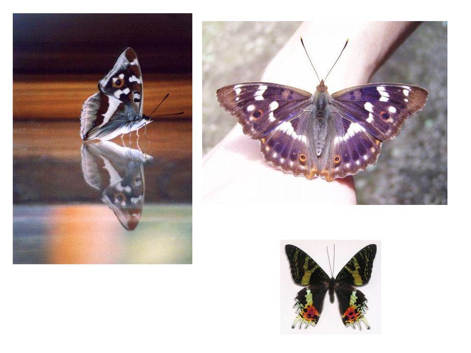 Příroda má mnoho tváří Proto je tak krásná