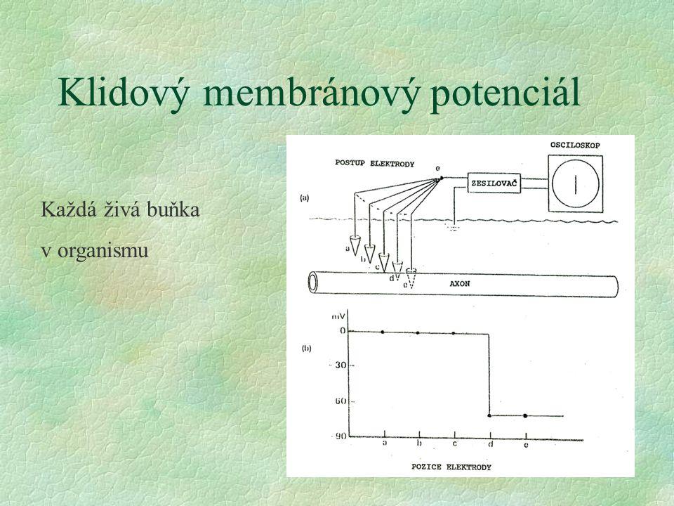 Klidový membránový potenciál Každá živá buňka v organismu