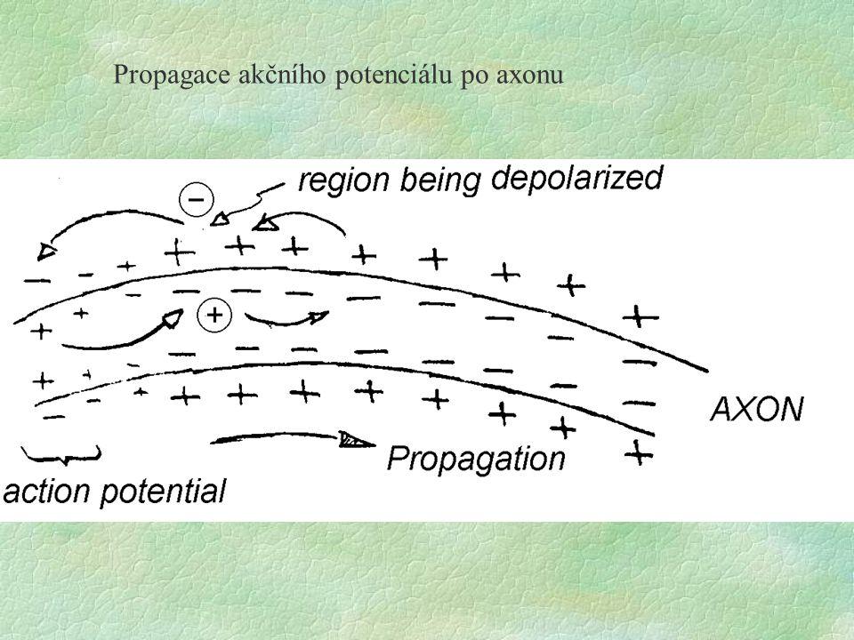 Propagace akčního potenciálu po axonu