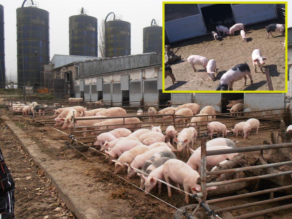 Podívali jsme se na bio jatka přímo na farmě  Dělicí prostory při postupu zvířat snižuje stres před porážkou