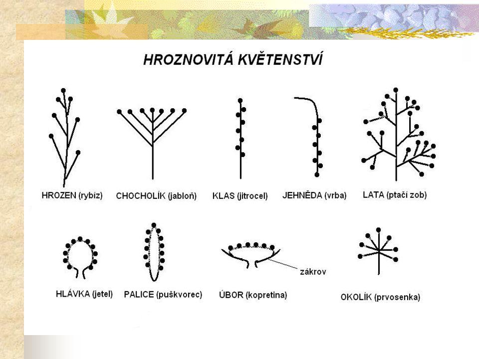  hlavním lákadlem pro opylovače je nektar, cukerný roztok vylučovaný rostlinou v době květu, méně často - asi u 10% domácích druhů je jím nadbytek pylu (např.