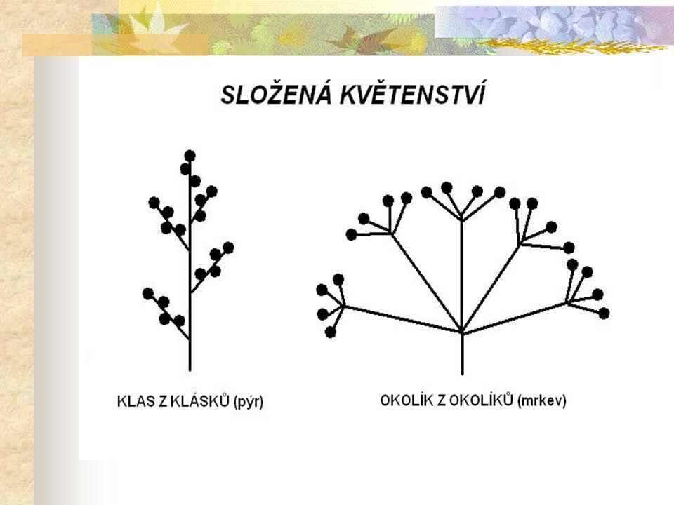  tyčinky jednoho květu se mohou lišit různě dlouhou nitkou (např.