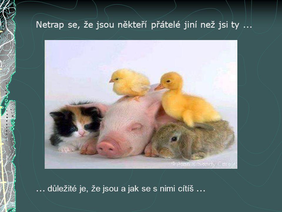 Netrap se, že jsou někteří přátelé jiní než jsi ty...... důležité je, že jsou a jak se s nimi cítíš...
