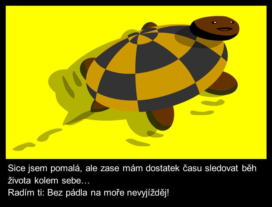 Trosečník uvízl na opuštěném ostrově.Společnost mu dělá stará moudrá želva.