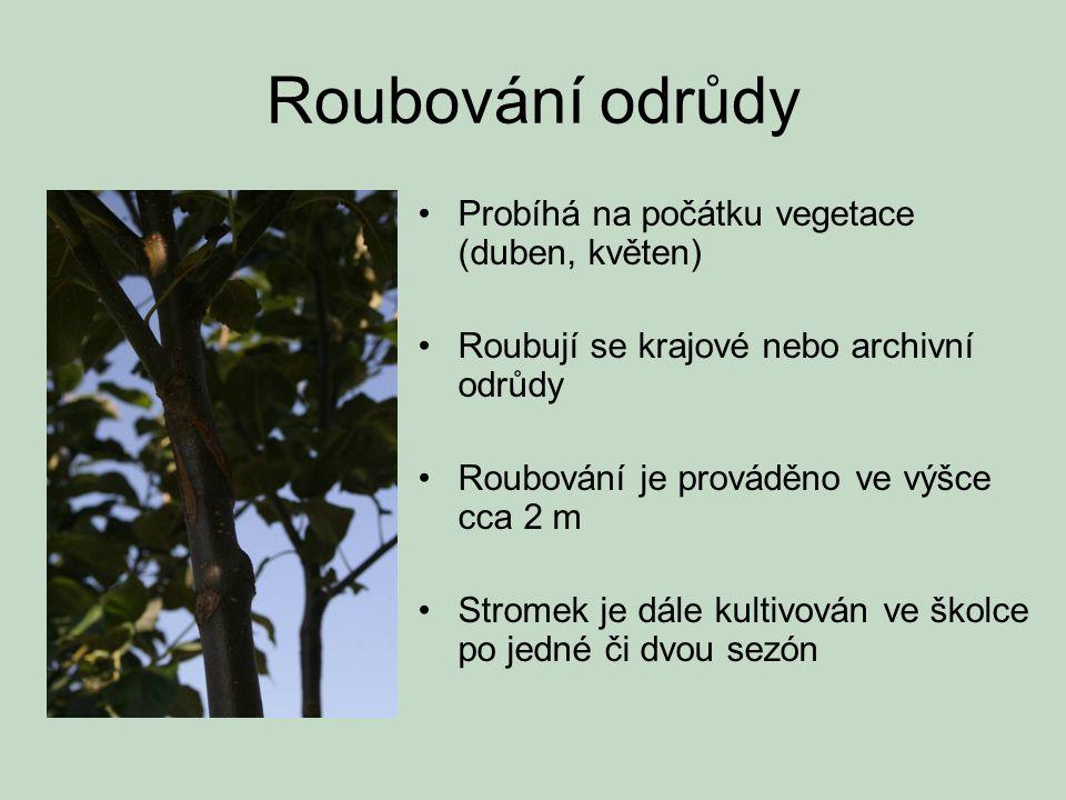 Roubování odrůdy •Probíhá na počátku vegetace (duben, květen) •Roubují se krajové nebo archivní odrůdy •Roubování je prováděno ve výšce cca 2 m •Strom