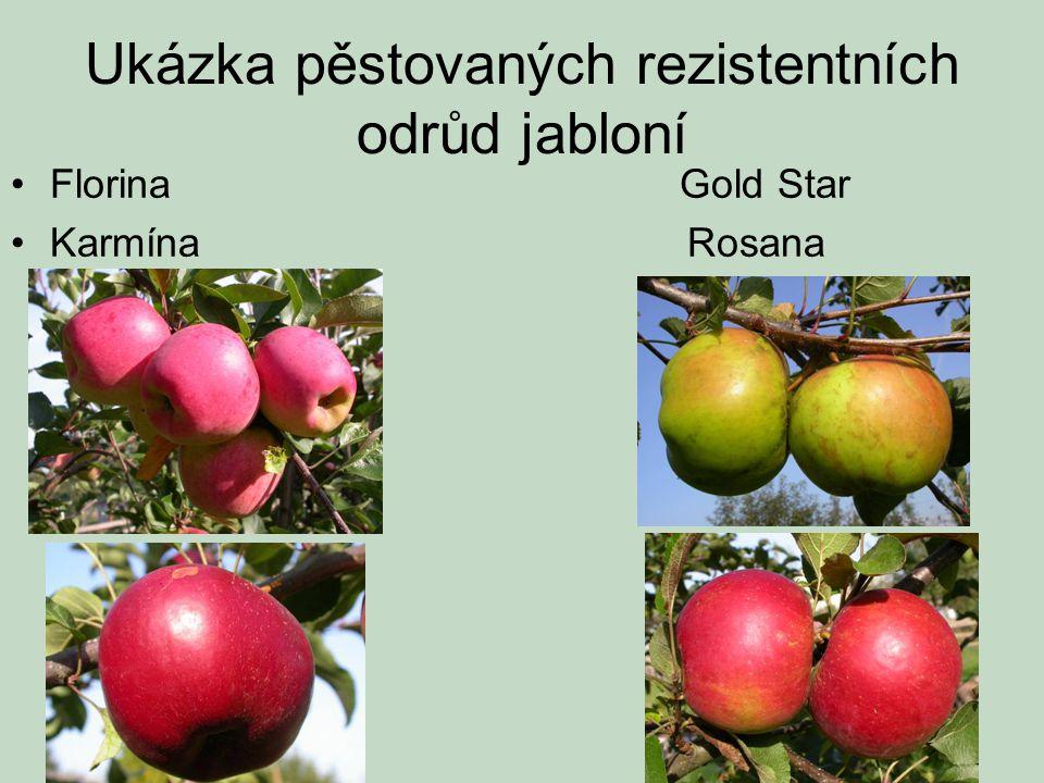Ukázka pěstovaných rezistentních odrůd jabloní •Florina Gold Star •Karmína Rosana