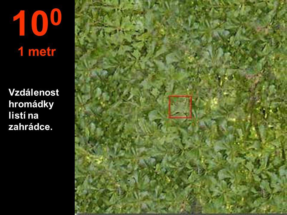 Vzdálenost hromádky listí na zahrádce. 10 0 1 metr