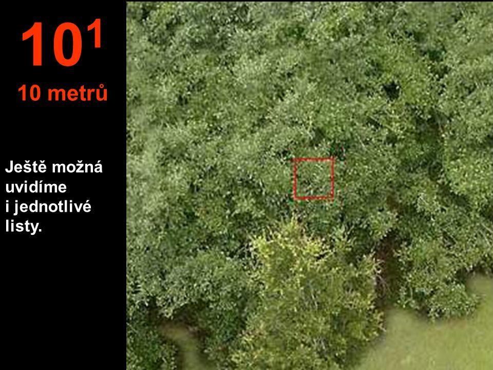 Ještě možná uvidíme i jednotlivé listy. 10 1 10 metrů
