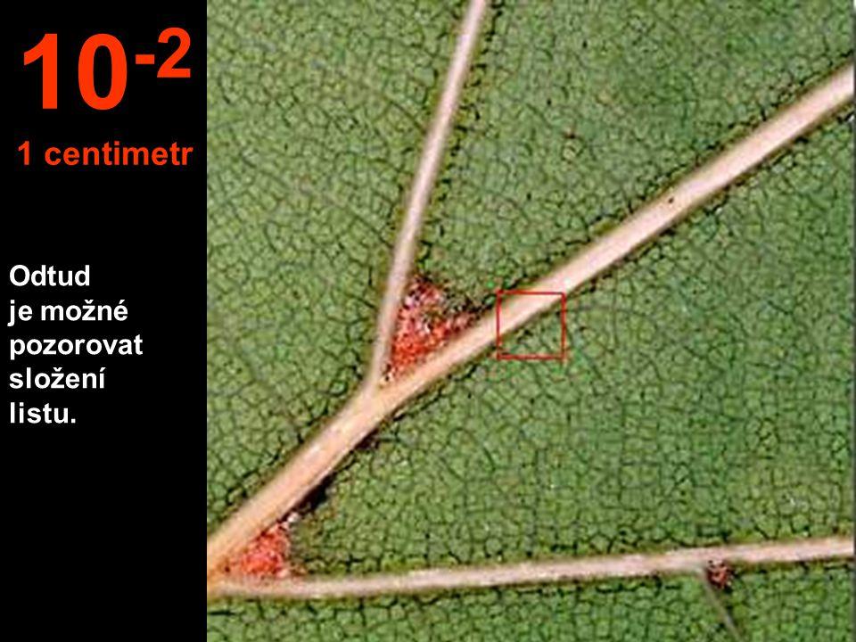 Odtud je možné pozorovat složení listu. 10 -2 1 centimetr