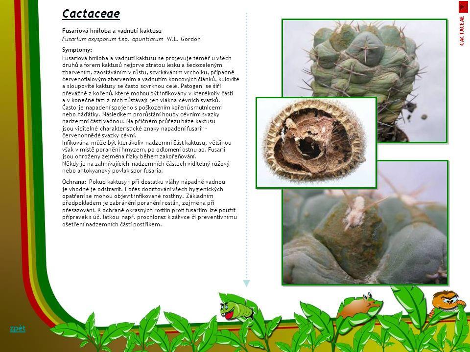 Bidens Padlí dvouzubce Sphaerotheca fusca (Fr.) Blumer Symptomy: Koncem léta se na listech a lodyhách dvouzubce objevuje bělavý až světle šedý povlak