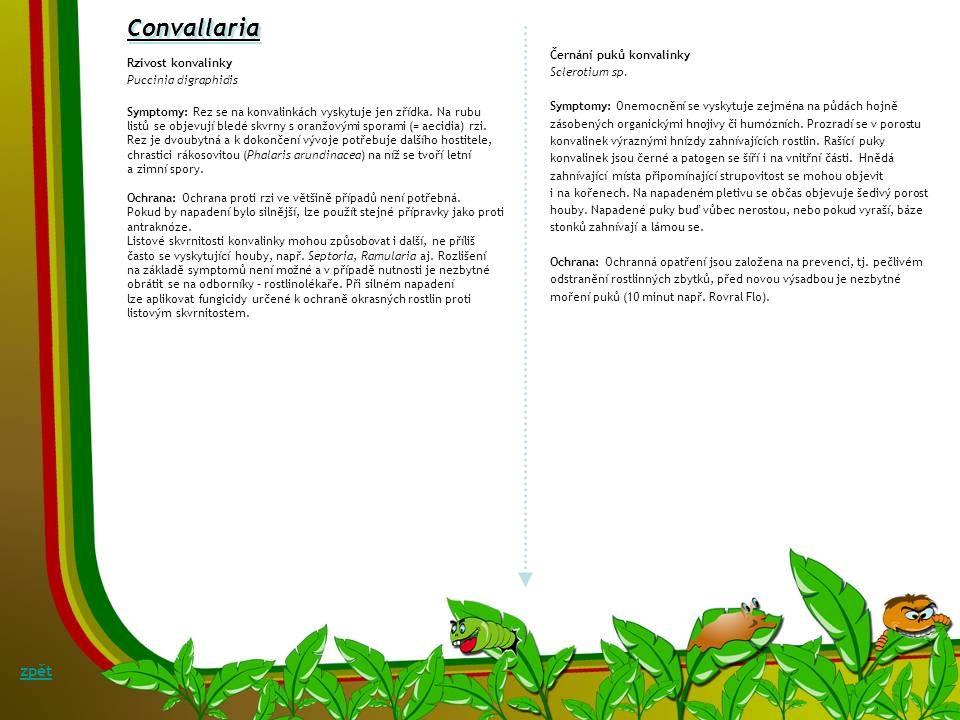 Convallaria Šedá stonková hniloba a padání konvalinky (Botrytis convallariae, B. cinerea) Symptomy: Ve volné přírodě, ale i u pěstovaných a rychlených